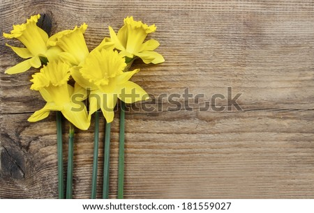 Beautiful yellow daffodils on brown wooden board. Top view, copy space - stock photo