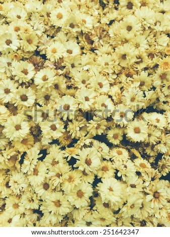 Beautiful Yellow Daisy flower background - stock photo