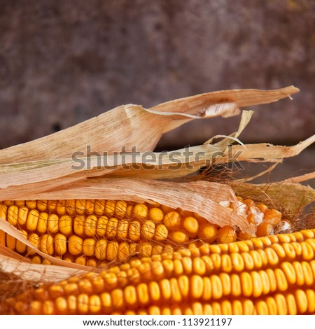 Beautiful yellow ear of corn over a background of corn kernels - stock photo