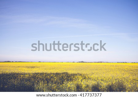 Beautiful yellow field and blue sky landscape - stock photo