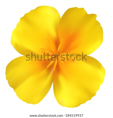 Beautiful yellow flower. Isolated on white. Illustration - stock photo
