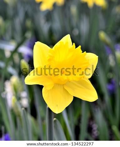 Beautiful yellow flower portrait - stock photo