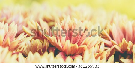beautiful yellow flower vintage tone - stock photo