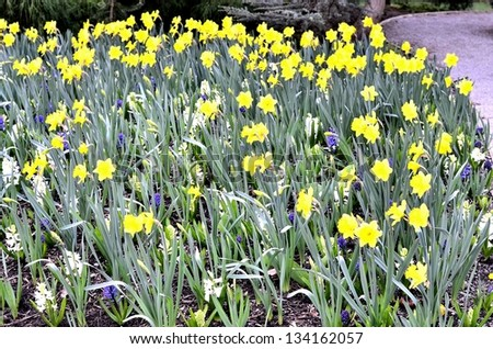 Beautiful yellow flowers in the park - stock photo