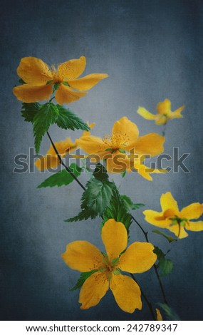 Beautiful yellow flowers over blue textured canvas - stock photo