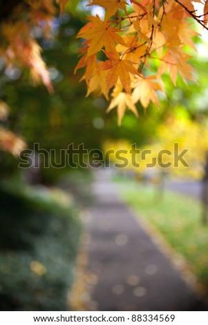 Beautiful yellow leaves framing an urban sidewalk - stock photo