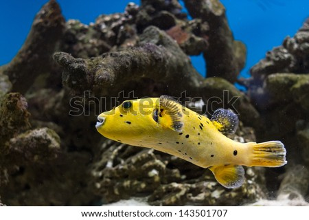 Reef Tank Stock Photos Images Pictures Shutterstock
