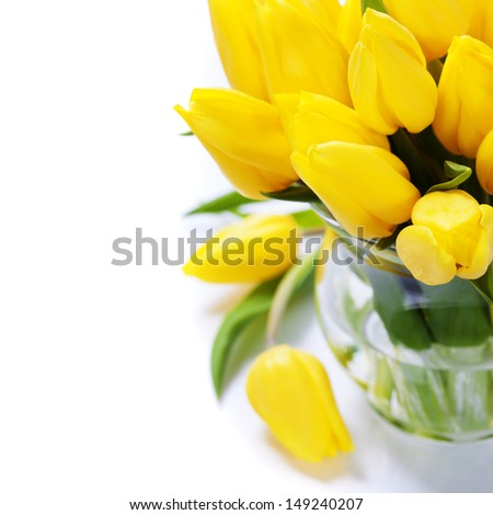 Beautiful yellow tulips over white - stock photo