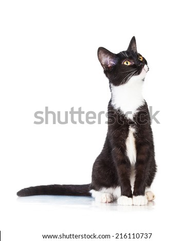 Beautiful young black and white cat looking up - stock photo