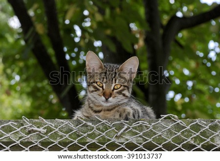 beautiful young stray cat sitting on the fence and posing for a photograph/ Funny young homeless cat - stock photo