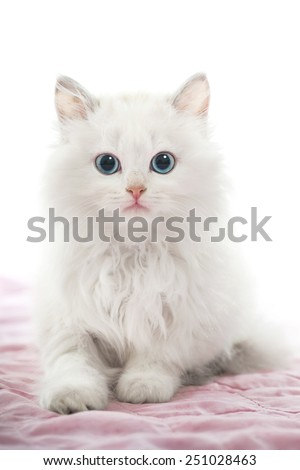 Beautiful Young White Cat with Blue Eyes on Pink Blanket - stock photo