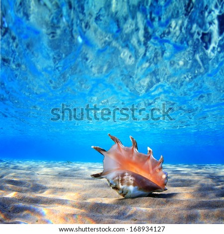 beautifull sea shell at the bottom of sand with reflections underwater  - stock photo