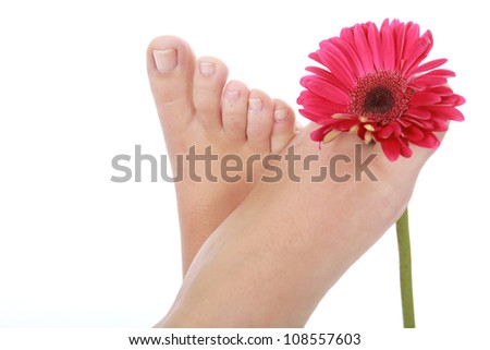 Beautifully manicured feet and toes of female with pink gerber flower - stock photo