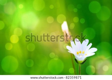 beauty a flower bokeh background - stock photo