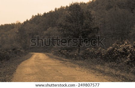Beauty autumn forest road with leaves sepia - stock photo