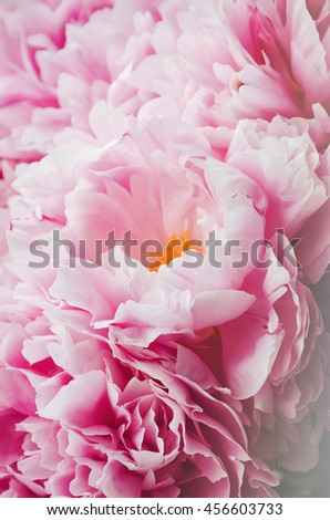 Beauty bunch of pink peonies peony flowers. Floral background. Spring or summer lovely bouquet. Bloom love concept. Card, text place, copy space. Wallpaper - stock photo