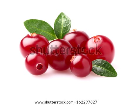 Beauty cranberry in closeup - stock photo