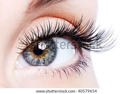 Beauty female eye with curl long false eyelashes - macro shot over white background - stock photo