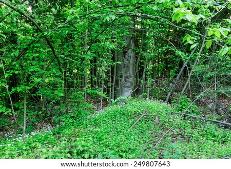 Beauty forest in the morning lonely tree with wild flowers - stock photo