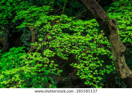 beauty garden scene with green color plants - stock photo