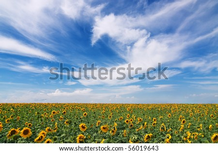 Beauty in nature - stock photo