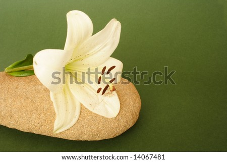 Beauty Madonna lily on stone on green background - stock photo