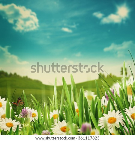 Beauty meadow with flowers and green grass under blue skies, seasonal backgrounds - stock photo