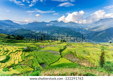 Beauty of ripen rice terraces at harvest time in early morning.  Location: Y Ty, Lao Cai province, Vietnam. - stock photo