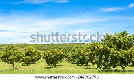 Beauty of the Cuban countryside, amazing blue sky and green color in a tropical country - stock photo