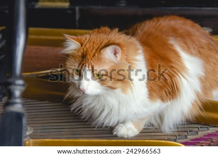 Beauty red cat on piano strings like musician - stock photo