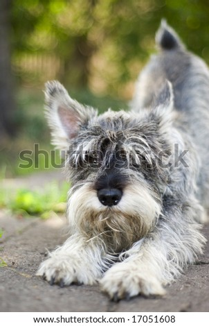 Beauty small dog - stock photo