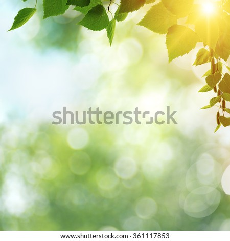 Beauty spring day, abstract seasonal backgrounds with green foliage and shining sun - stock photo