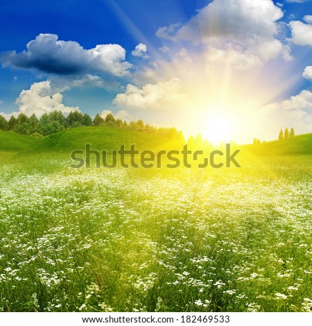 Beauty summer field under bright evening sun, natural backgrounds - stock photo