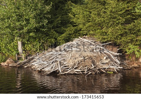Beaver lodge in lake - stock photo