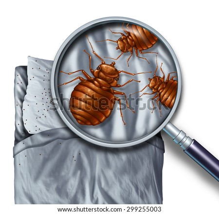 Bed bug or bedbug infestation concept as a magnification close up of  parasitic insect pests on a pillow and under the sheets as a hygiene symbol and metaphor of parasite danger inside a mattress. - stock photo