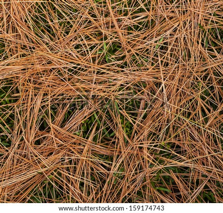 Bed of pine needles on a background of green landscape shrub. - stock photo