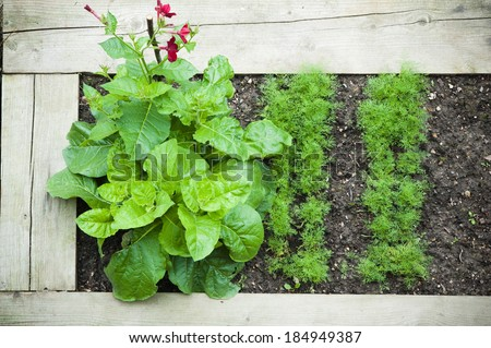 Bed with plants, top view - stock photo