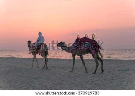 Bedouin with camels on the beach at sunset - stock photo