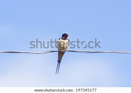 bedraggled swallows on wire - stock photo