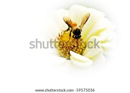 Bee. - stock photo