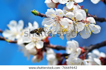Bee and white flower. - stock photo