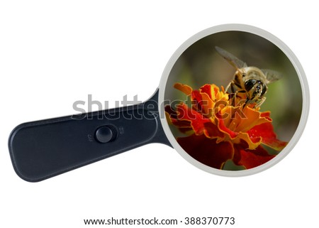 Bee and yellow flower enlarged under the microscope - stock photo