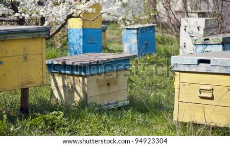 bee clues in the spring meadow garden - stock photo