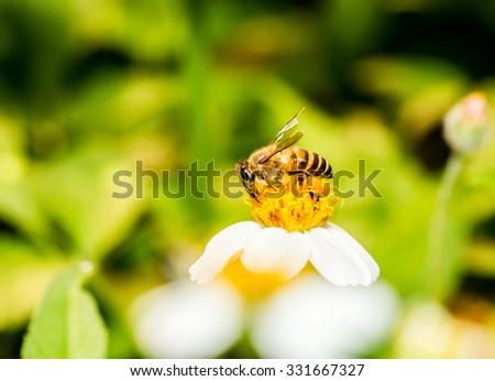 Bee eat pollen of flower - stock photo