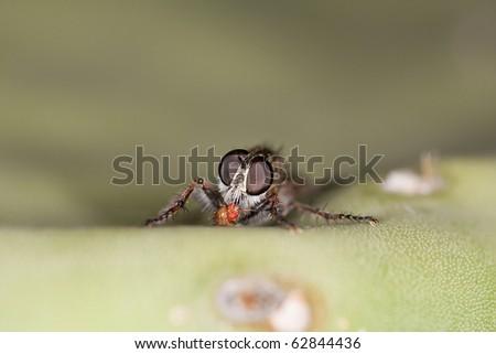Bee eating - stock photo