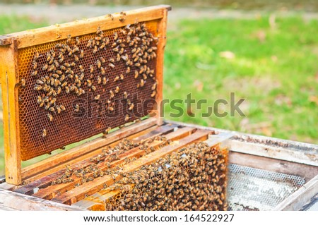 bee farm in a box - stock photo