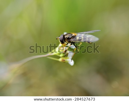 Bee flying on a green flower background - stock photo