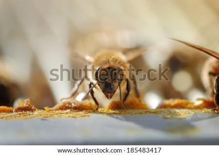 Bee Guard - stock photo
