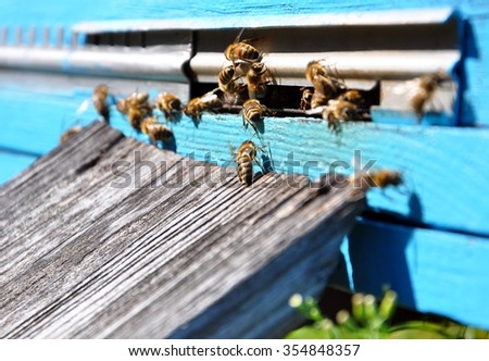 bee hive with bees on it - stock photo