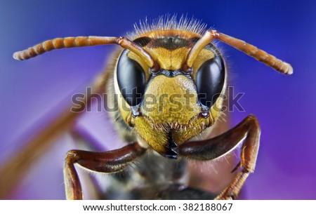 bee, honey, macro, wild, bite, insects, nature - stock photo